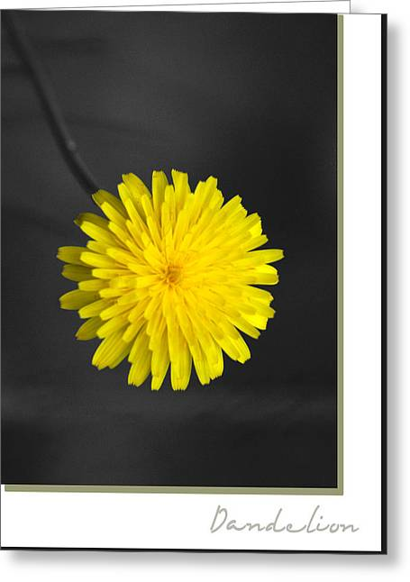 Dandelion Greeting Card by Holly Kempe