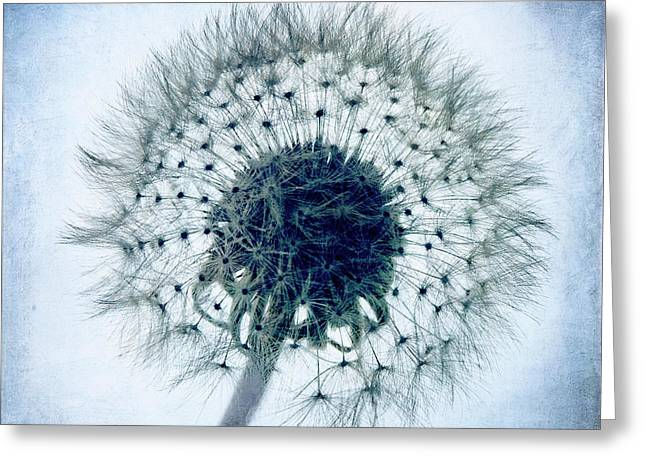 Tamyra Ayles Greeting Cards - Dandelion in Blue Greeting Card by Tamyra Ayles
