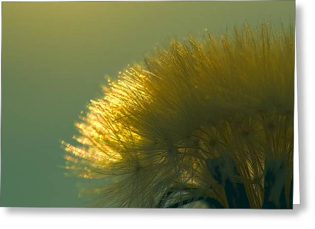 Dandelion In Green Greeting Card