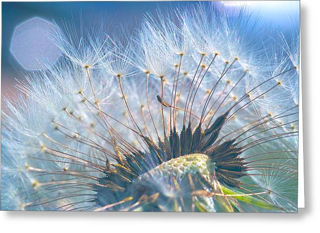 Dandelion In Light Greeting Card