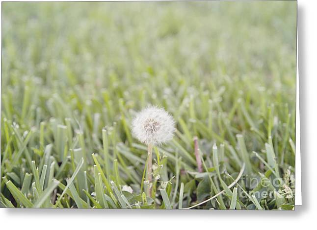 Greeting Card featuring the photograph Dandelion In The Grass by Cindy Garber Iverson