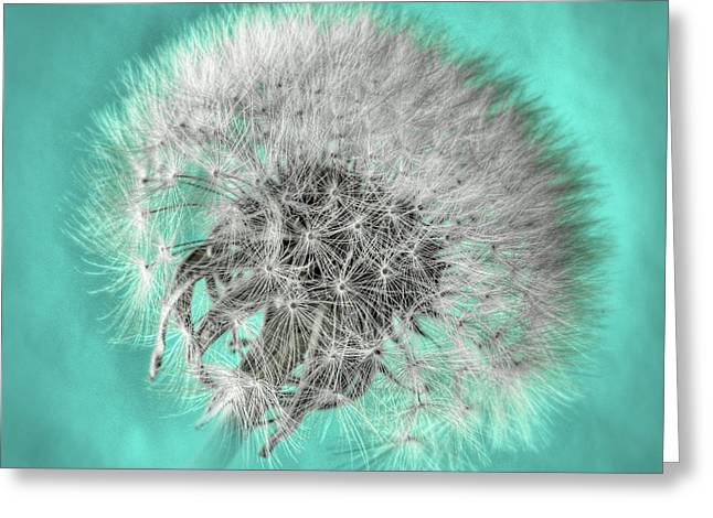Dandelion In Turquoise Greeting Card by Tamyra Ayles