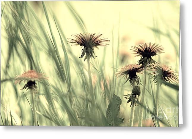 Dandelion Meadow Greeting Card by Tanja Riedel