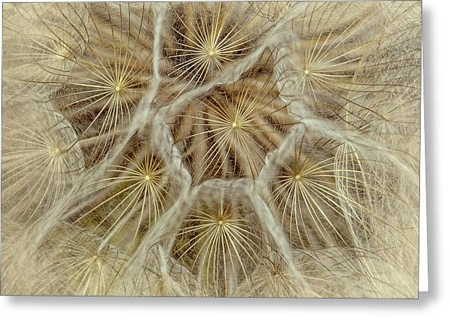 Dandelion Particles Greeting Card