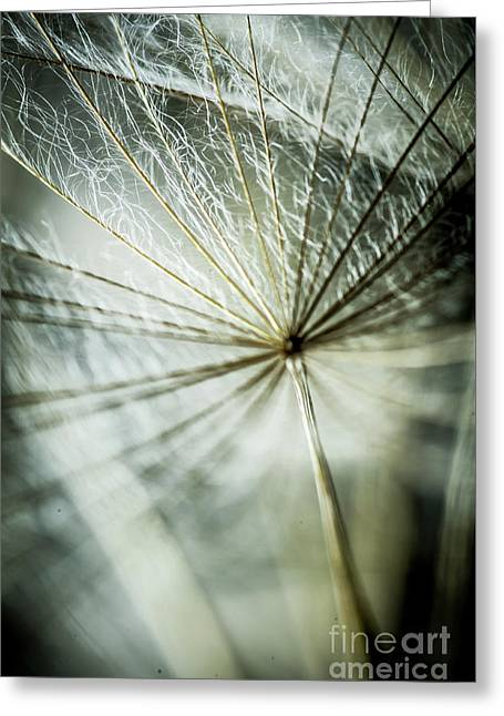 Dandelion Petals Greeting Card by Iris Greenwell