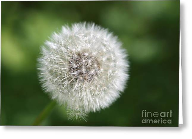 Dandelion - Poof Greeting Card