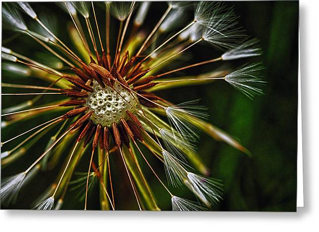 Dandelion Puff Greeting Card