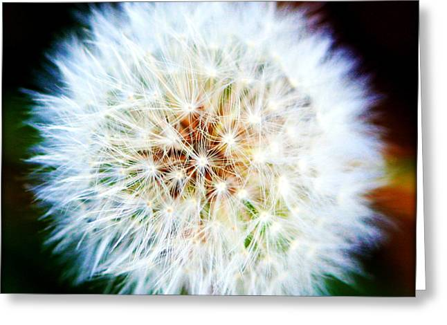 Parachute Ball Greeting Cards - Dandelion Puff Greeting Card by Susie Weaver