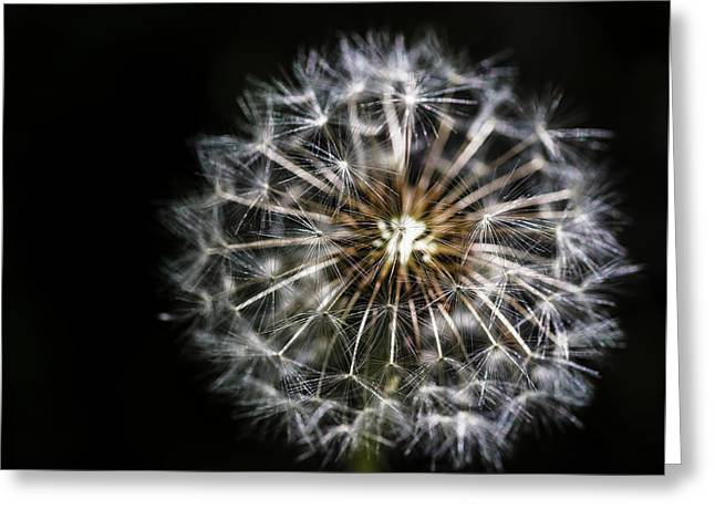 Greeting Card featuring the photograph Dandelion Seed by Darcy Michaelchuk