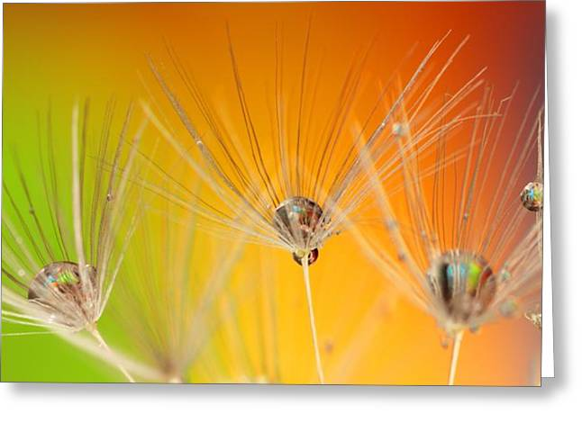 Dandelion Seed With Water Drops Greeting Card