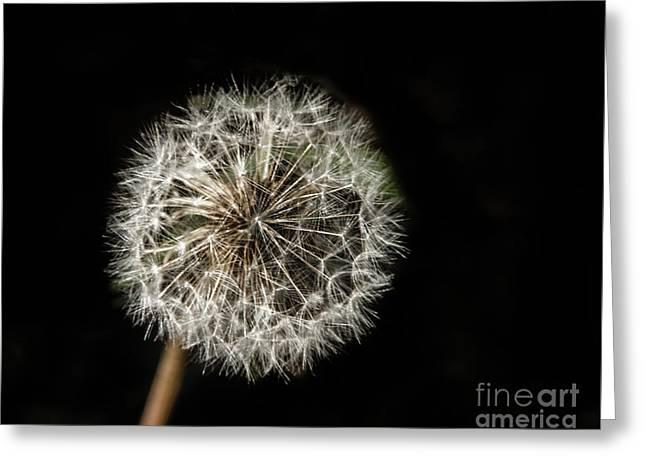 Dandelion Seeds Greeting Card by Robert Bales