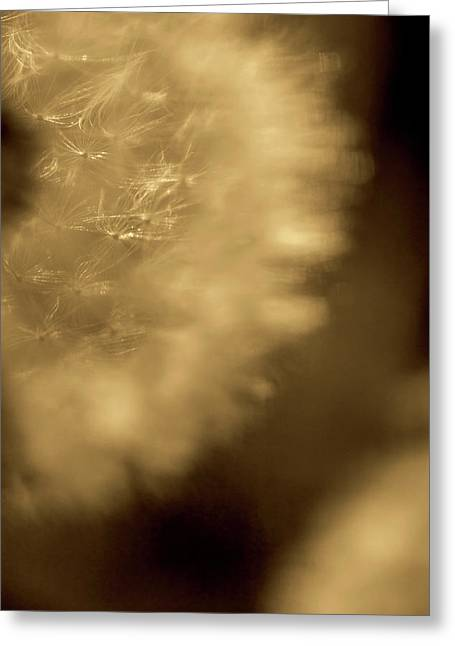 Dandelion-sepia Greeting Card by Sue OConnor