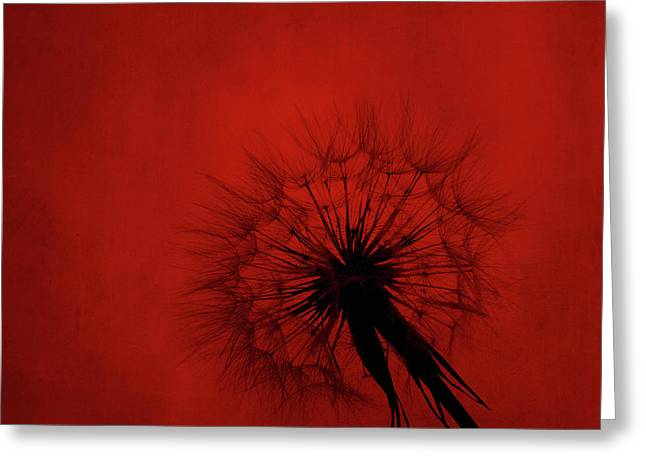 Dandelion Silhouette On Red Textured Background Greeting Card
