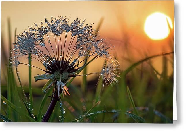 Dandelion Sunset 2 Greeting Card