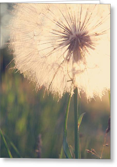 Dandelion Sunshine Greeting Card