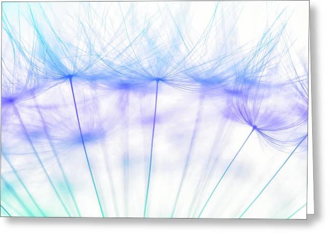 Dandelion Tender Greeting Card by Natalya Myachikova