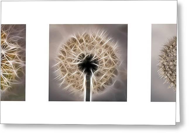 Dandelion Triptych Greeting Card