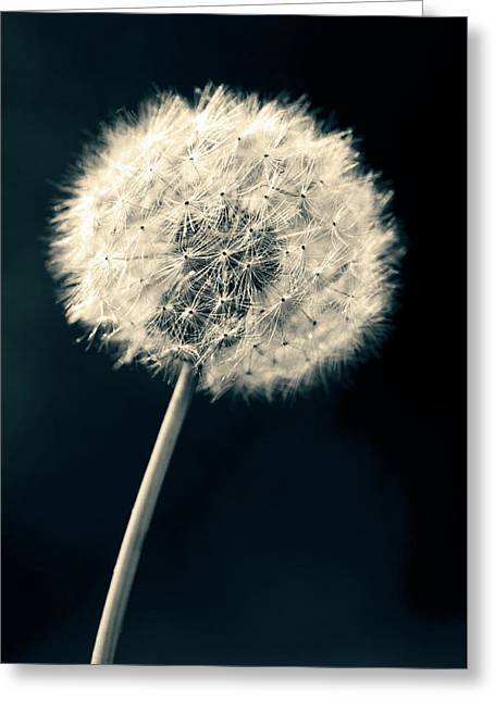 Dandelion Greeting Card by Ulrich Schade