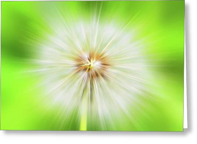 Dandelion Warp Greeting Card