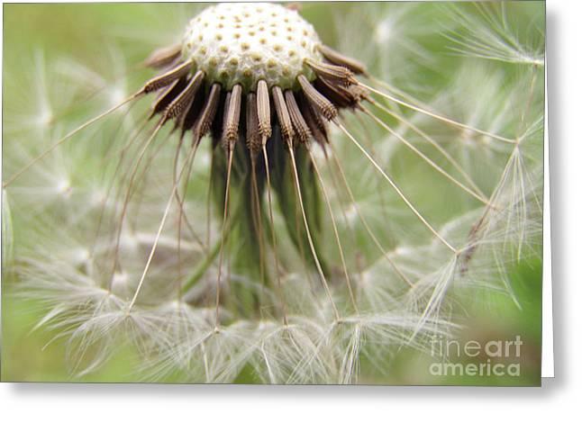 Dandelion Wish 8 Greeting Card