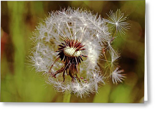 Dandelion Wishes Greeting Card by Debbie Oppermann
