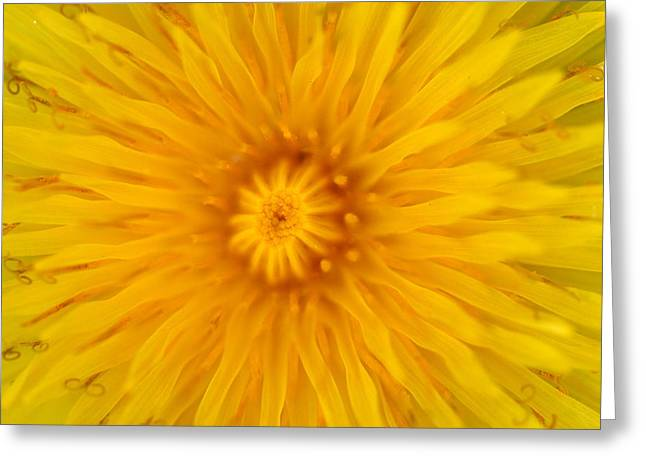 Dandelion8 Greeting Card