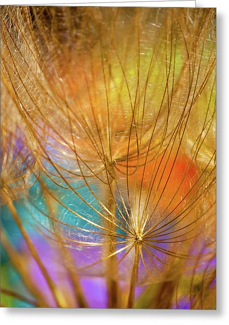 Dandelions In Spring Greeting Card by Iris Greenwell