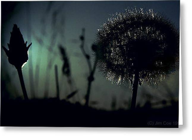 Dandelions Greeting Card by Jim Coe