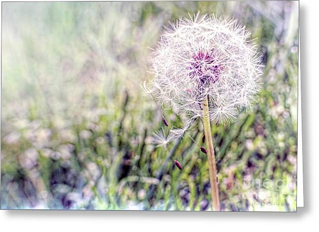 Dandilion Wishes Greeting Card