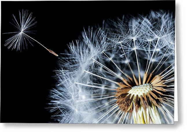 Greeting Card featuring the pyrography Dandy by Bess Hamiti