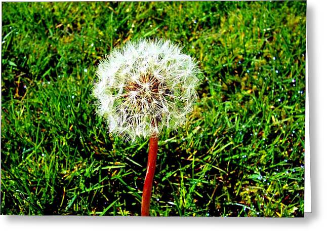 Dandy Greeting Card by Kevin D Davis