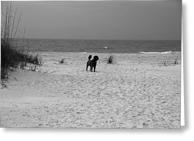 Greeting Card featuring the photograph Dandy On The Beach by Michiale Schneider