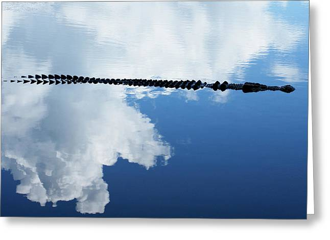 Greeting Card featuring the photograph Dangerous Reflection Saltwater Crocodile by Gary Crockett