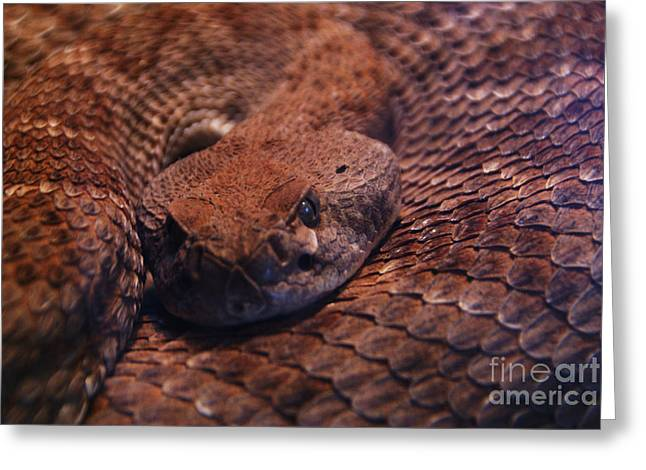 Dangerously Handsome Greeting Card by Linda Shafer