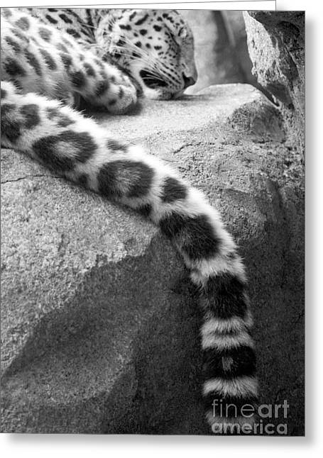 Dangling And Dozing In Black And White Greeting Card