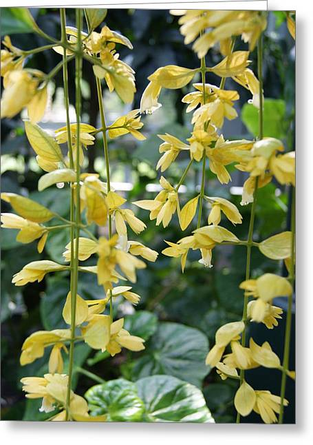 Dangling Yellow Flowers Greeting Card by Tina McKay-Brown