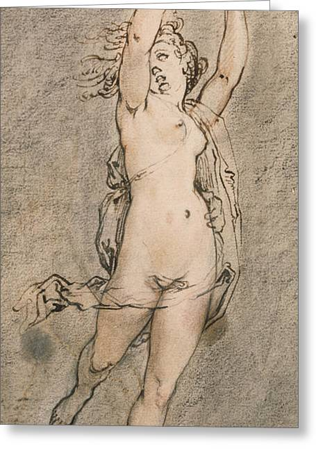 Daphne Greeting Card by Hendrik Goltzius
