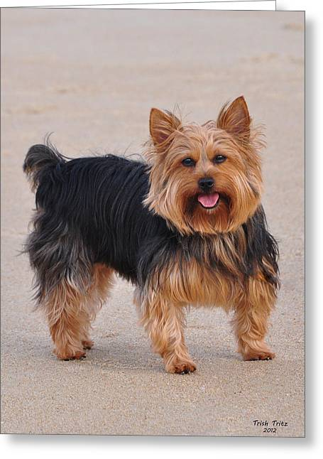 Dapper Dog Greeting Card