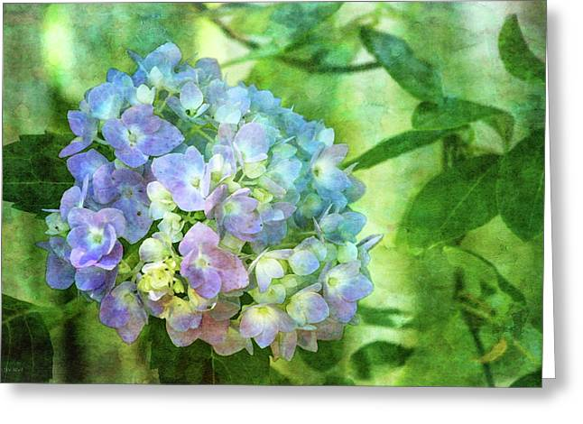 Dappled Light Hydrangea 2300 Idp_2 Greeting Card