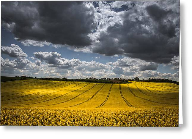 Dappled Sunlight On The Rapeseed Field Greeting Card by Chris Fletcher