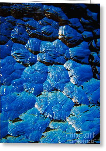 Dark Blue Greeting Card by Hideaki Sakurai