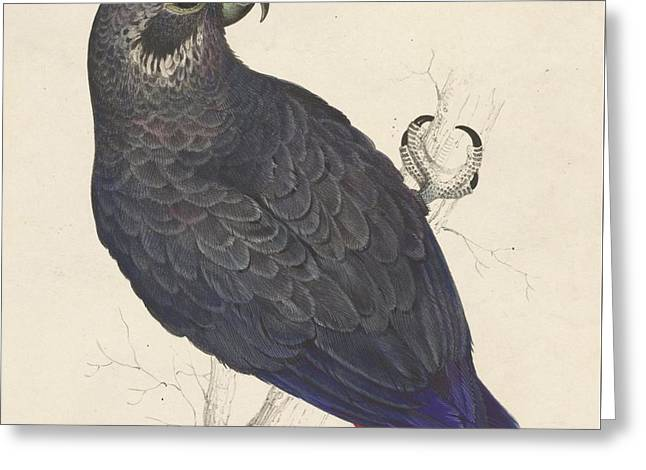 Dark Blue Parrot Greeting Card