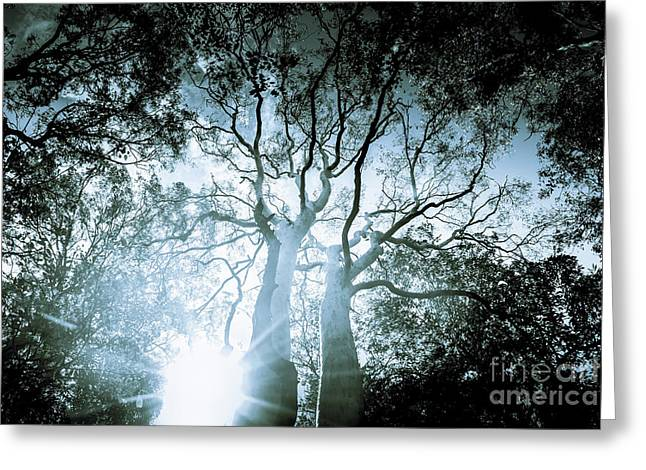 Dark Blue Spooky Trees Greeting Card