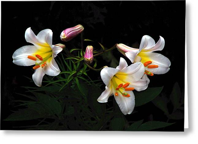 Greeting Card featuring the photograph Dark Day Bright Lilies by Byron Varvarigos