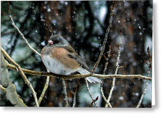 Dark-eyed Junco During A Snowfall Greeting Card