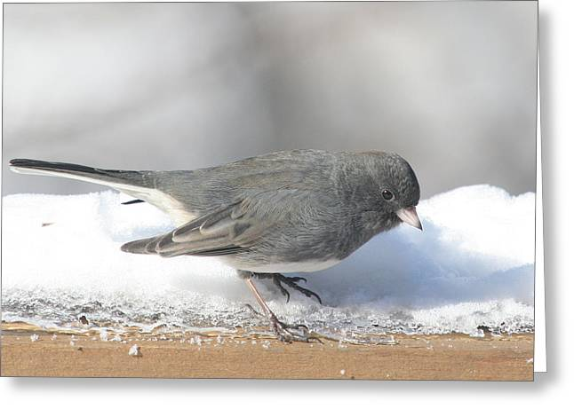 Dark Eyed Junco On The Railing 3 Greeting Card by Laurie With