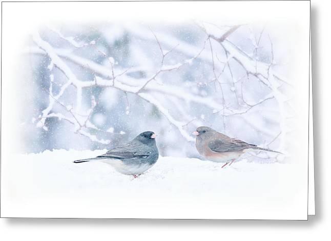 Dark-eyed-juncos In Snow Greeting Card by Barbara Hymer