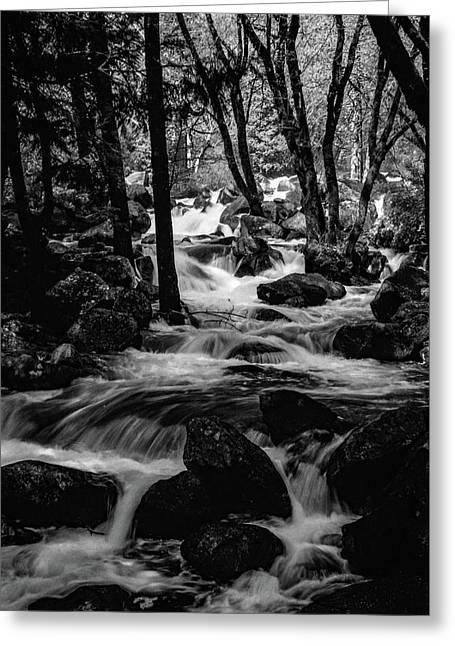 Dark Forest Bright Water Greeting Card