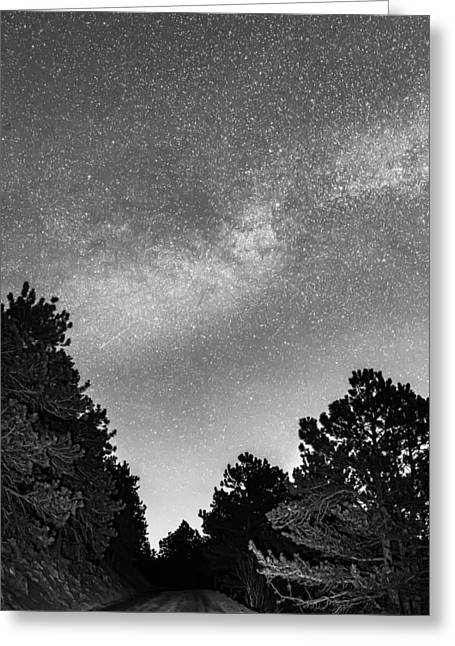 Dark Forest Night Light Greeting Card by James BO Insogna