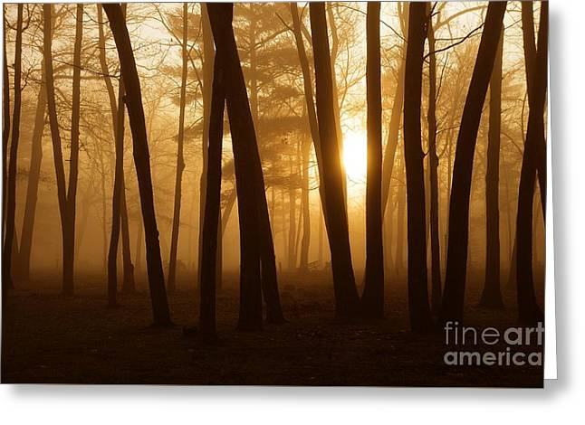 Dark Forest Greeting Card